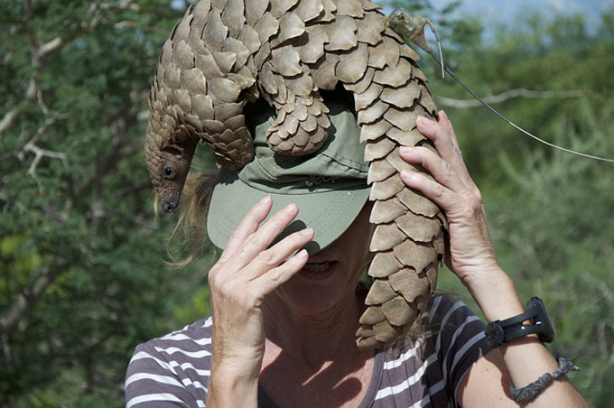 Pangolins get a lifeline: Investec and JWVH open first dedicated pangolin ward in Africa